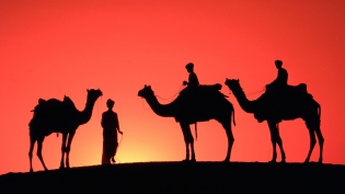 camels_in_the_desert_1920x1440